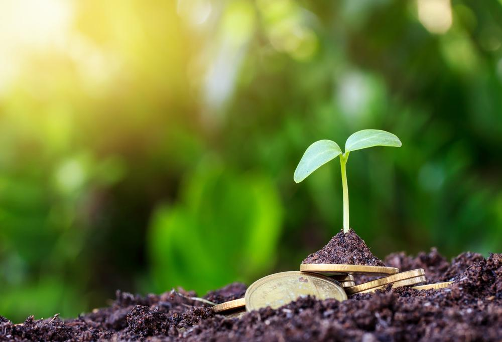 oneworldcapital green business