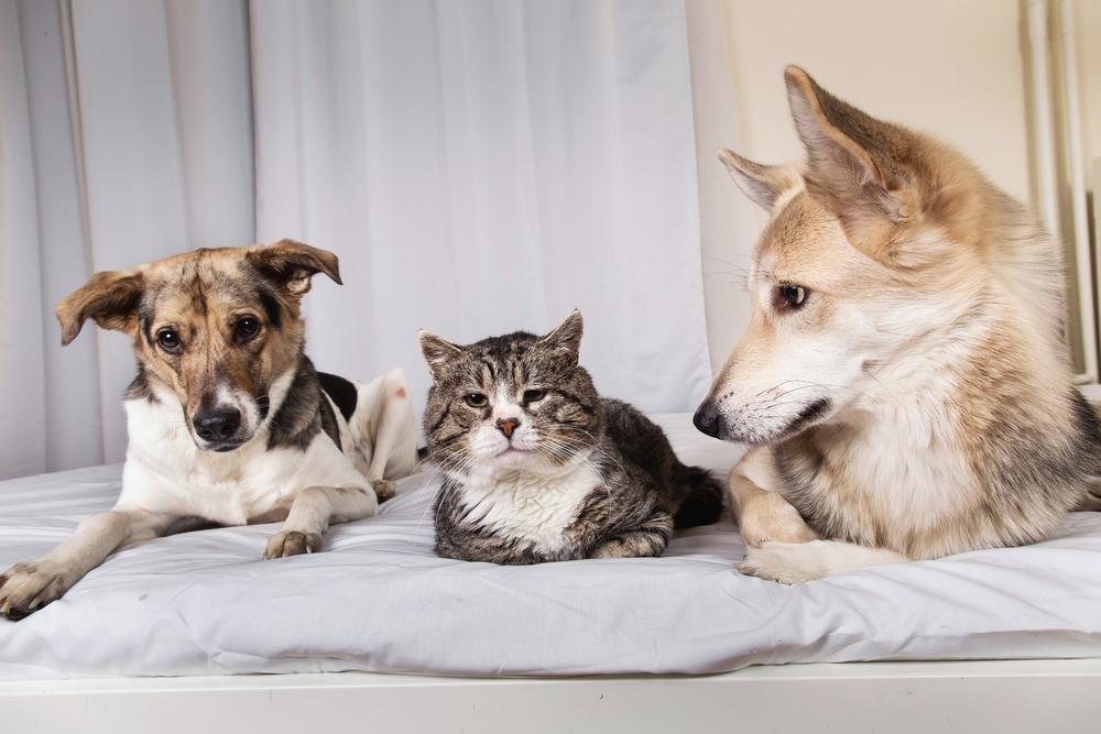 pets at home pets